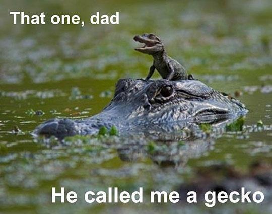 http://www.phun.org/newspics/funny_friday_2/6589.jpg